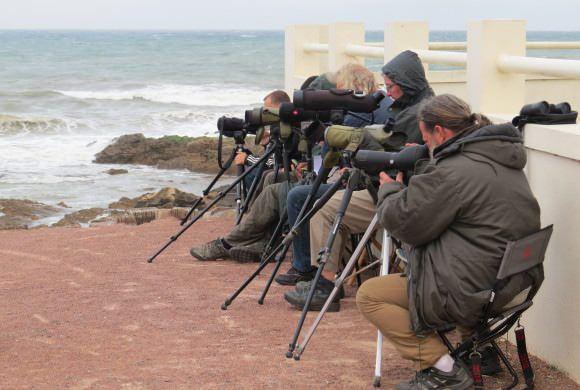 Bénévoles de la LPO Vendée : pensez à saisir votre bénévolat 2015