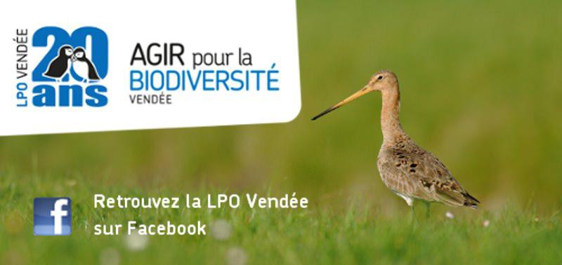 LPO85_facebook