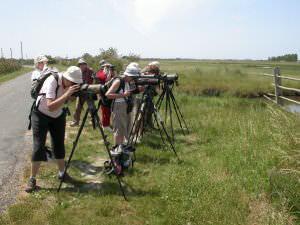 Sortie ornitho en Marais breton