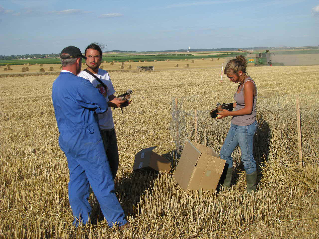 """Formation adhérents LPO """"Initiation à la pose de protections autour des nids de busards"""""""
