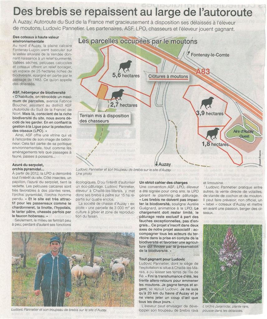 Ouest France du 03 novembre 2015 : Des brebis se repaissent au large de l'autoroute