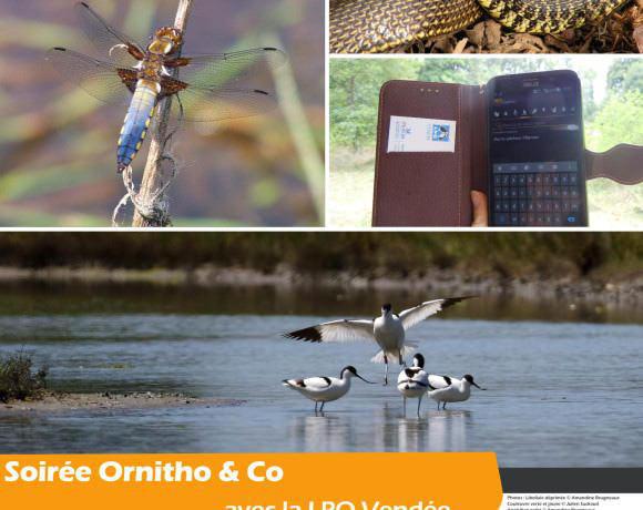 Soirée Ornitho & Co