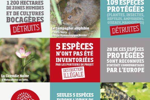 Un aéroport à Notre Dame-des-Landes : quel coût pour la biodiversité ?