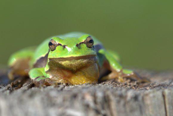 Consultation publique sur arrêté préfectoral autorisant la destruction d'espèces protégées : exprimez-vous !