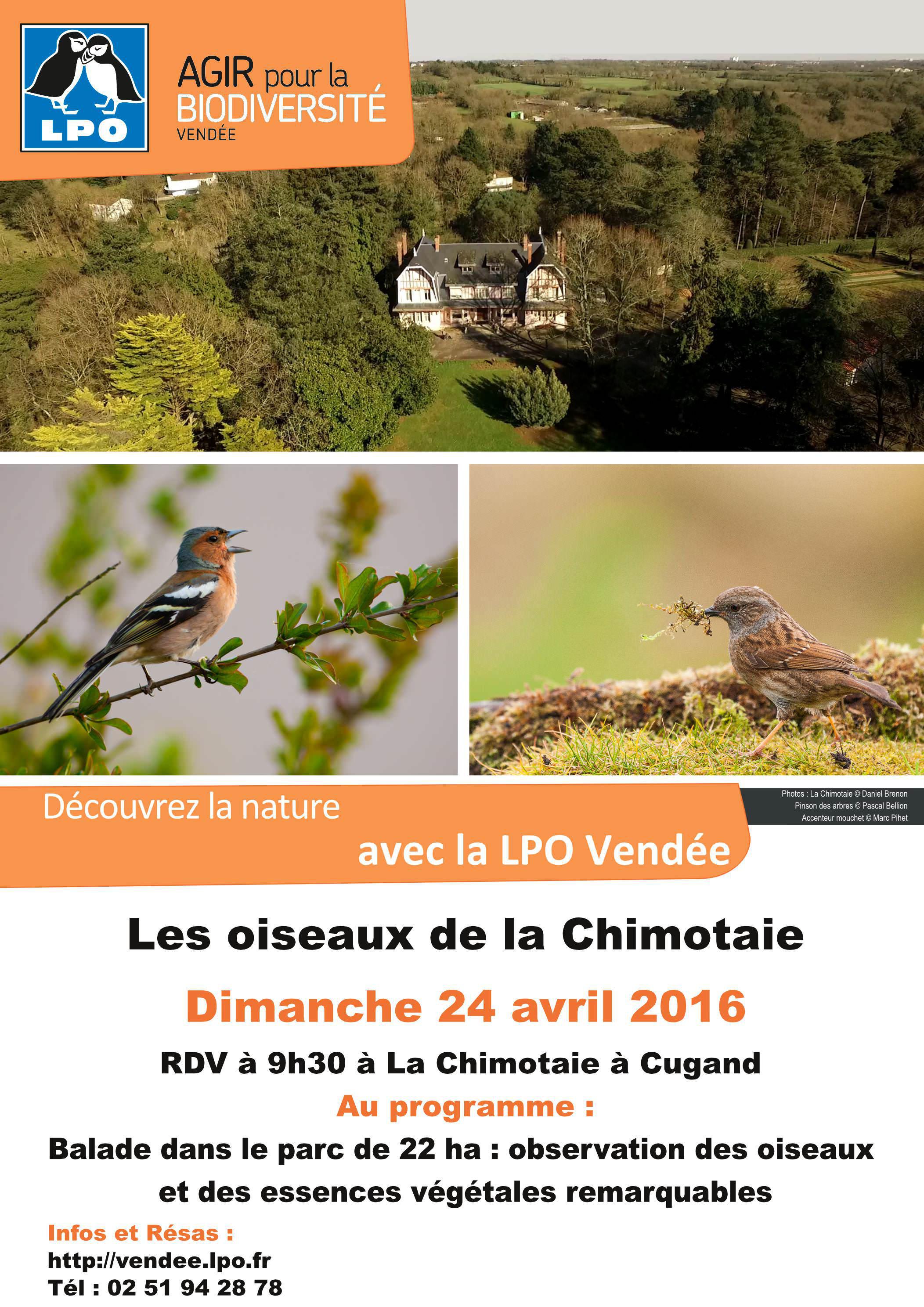 Les oiseaux de la Chimotaie
