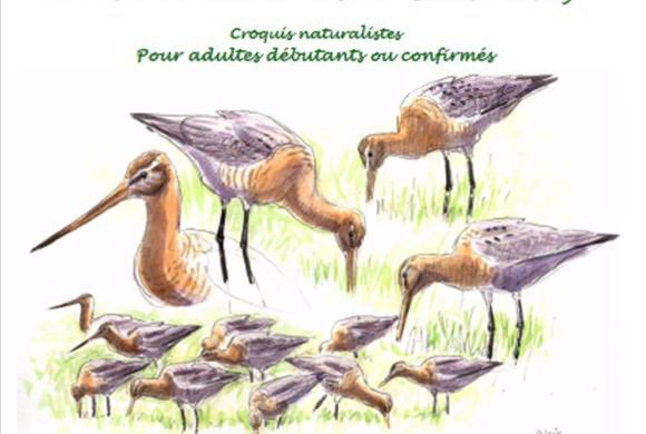 Stage croquis naturaliste avec Olivier Loir
