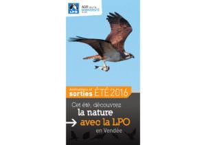 Guide des sorties 2016 de la LPO Vendée Photo de Balbuzard pêcheur © Clément Caiveau