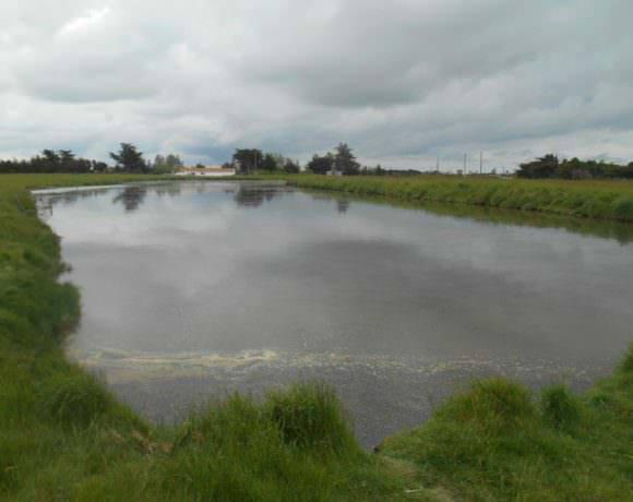 La LPO Vendée installe deux sauniers pour protéger la nature
