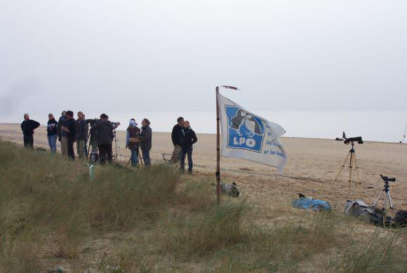 Fin du camp de migration 2016 à la Pointe de l'Aiguillon