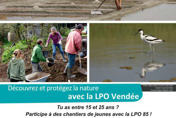 Chantier de jeunes avec la LPO Vendée