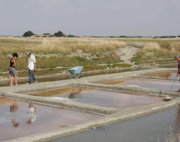 En Vendée, la LPO agit pour la biodiversité tout en favorisant d'activité économique