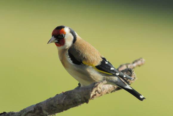 Ces oiseaux communs vont-ils disparaître ?