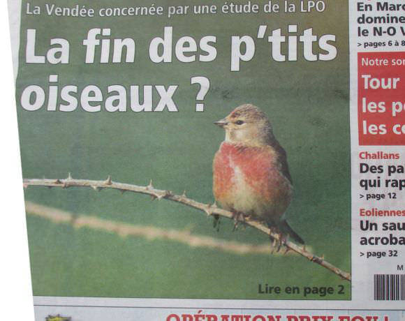 Ces oiseaux communs devenus rares