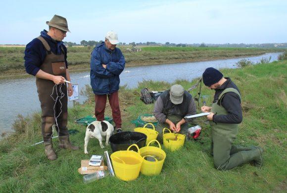 L'Alose feinte : la LPO Vendée étudie aussi les poissons !