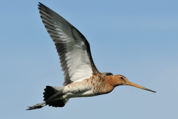 Consultation publique pour une ouverture anticipée de la chasse au 3 août 2019 !
