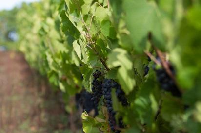 Balade nature dans le vignoble