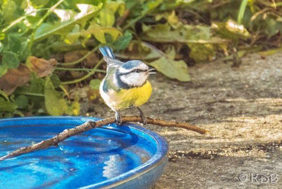 L'eau et les oiseaux