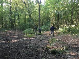 Actions forestières :  inventaires, suivis, travaux, conseils
