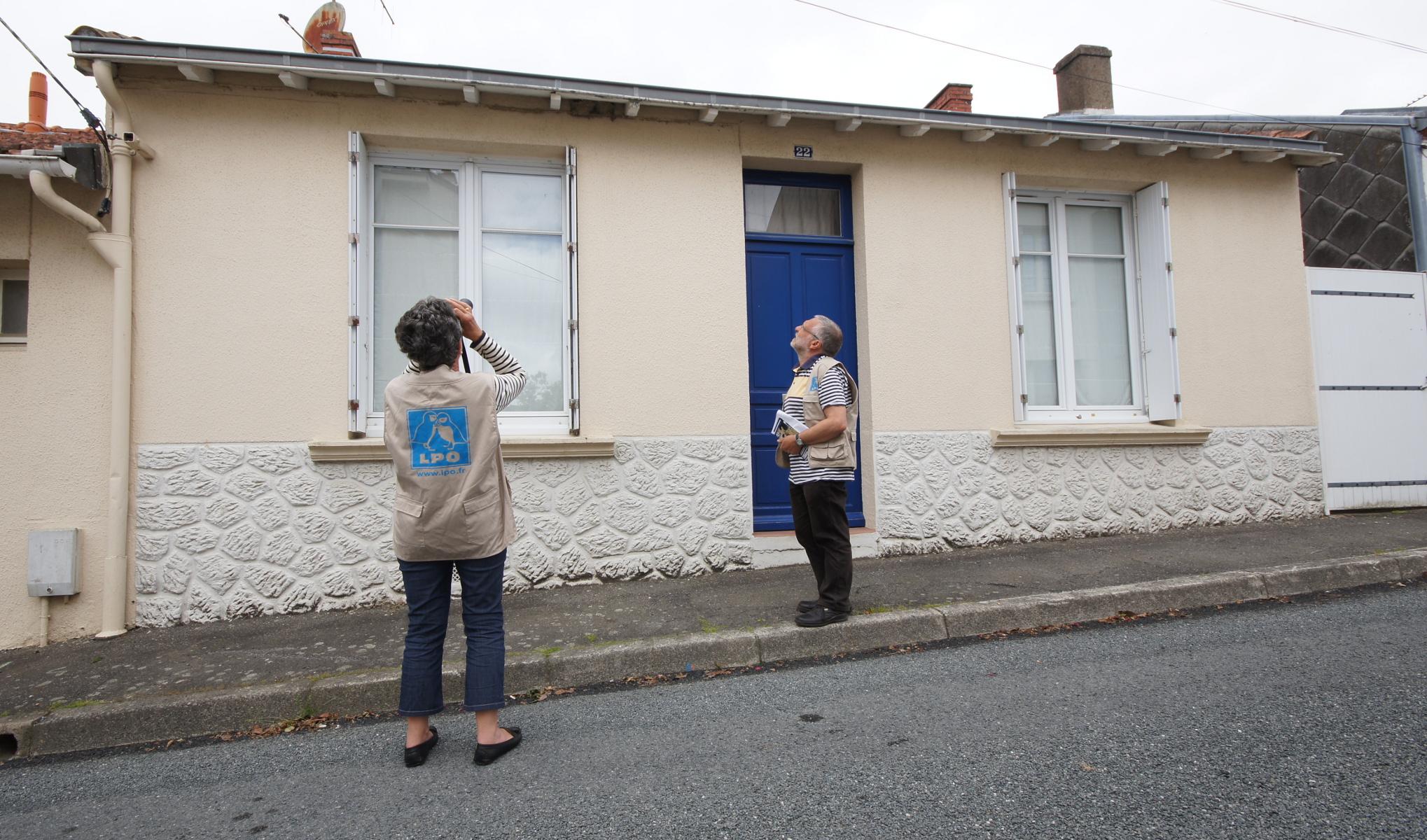 Hirondelles : suivi des populations et accompagnement des collectivités