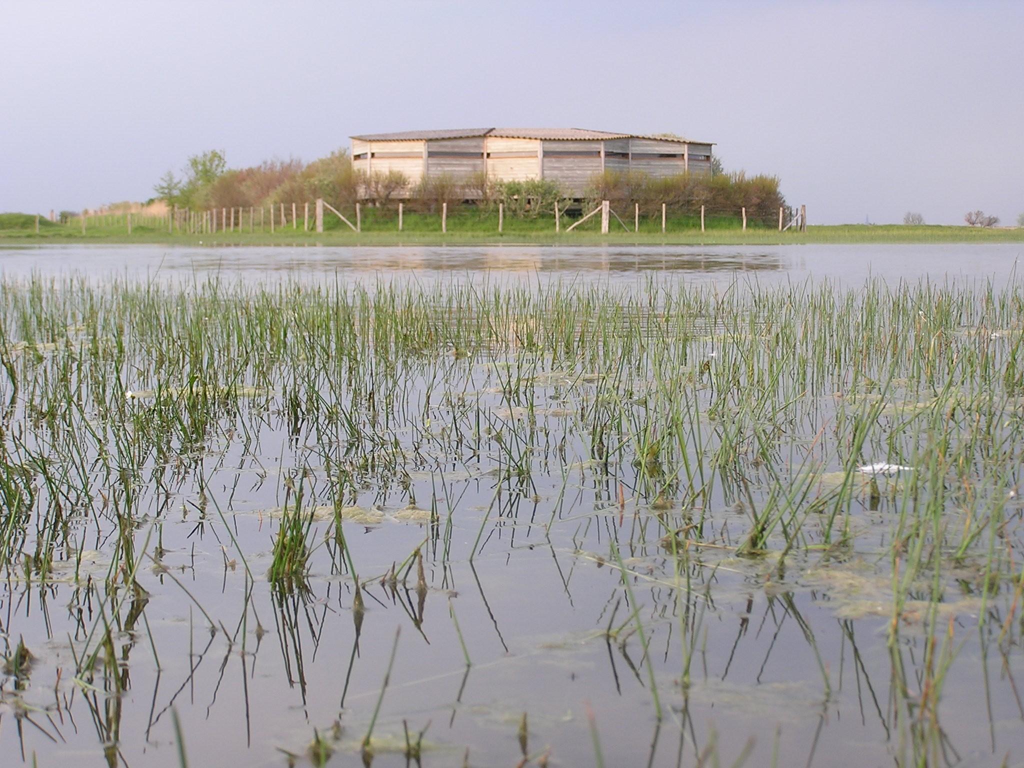 Réserve naturelle de St-Denis-du-Payré S. Hunault