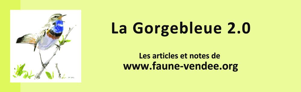 Gorgebleue (revue de la LPO Vendée)