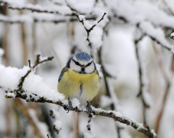 """Participer au comptage national """"Oiseaux des jardins"""""""