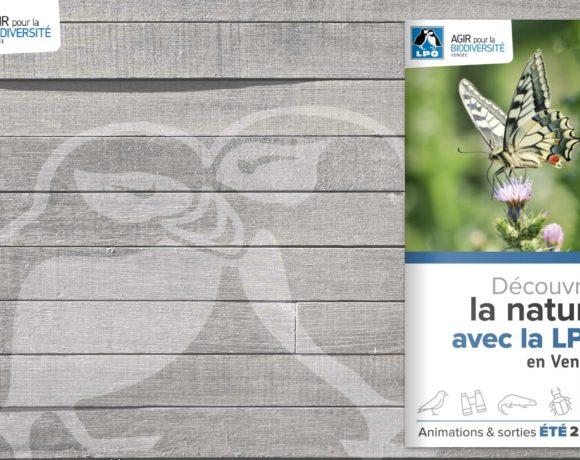Cet été, découvrez la nature en Vendée avec la LPO