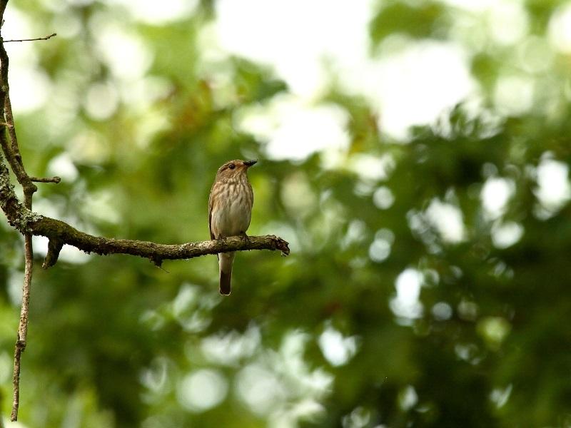 Oiseaux migrateurs à la ferme