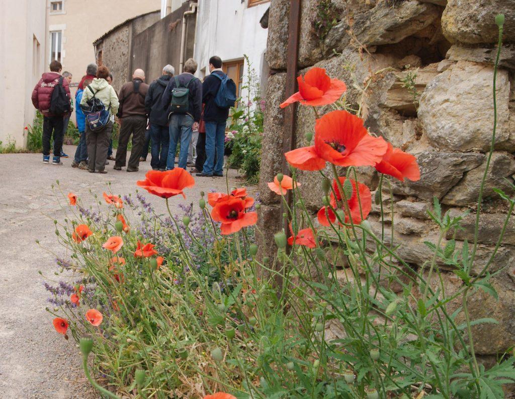 Biodiversité en ville © Amandine Brugneaux - LPO Vendée