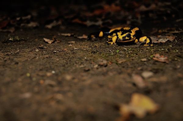 """Formation pour les adhérents LPO """"Reconnaissance des amphibiens et des reptiles"""""""