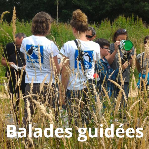 Balades guidées avec les animateurs de la LPO Vendée