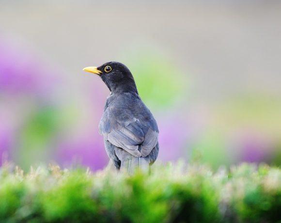 """Participez au comptage """"Oiseaux des jardins"""""""