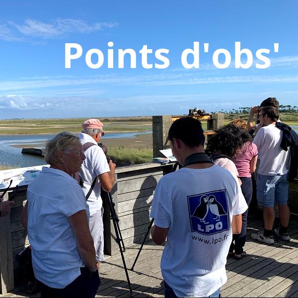 Points d'obs avec la LPO Vendée - venez jeter un coup d'oeil dans la longue-vue