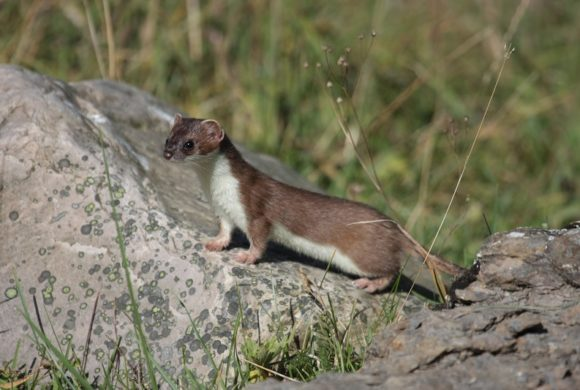 Oiseaux, mammifères, amphibiens, reptiles : des espèces toujours plus menacées dans les Pays de la Loire